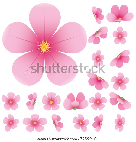 cherry blossom  flowers of