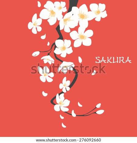 cherry blossom  japanese sakura