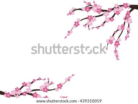 cherry blossom sakura  pink