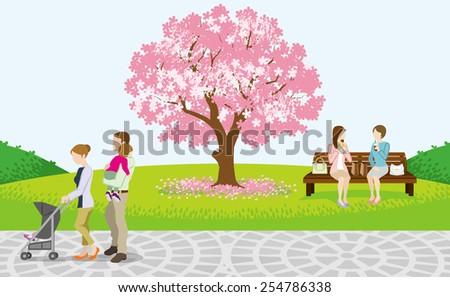 cherry blossom tree and