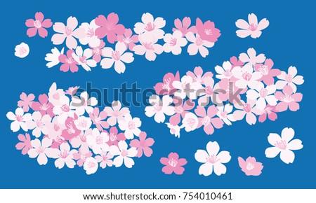 Cherry blossom vector illustrations - Sakura ストックフォト ©