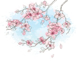 Cherry blossom, watercolor spring sakura flowers on sky blue background, hand drawn art set. Cute oriental painted  plant. Botanil pastel vector illustration, isolated on white. Springtime sketch