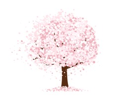 Cherry Blossoms illustration.
