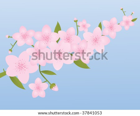 Cherry Blossoms on Spring Blue Background - stock vector