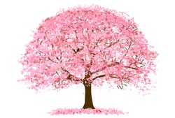 Cherry Blossoms Spring flower icon