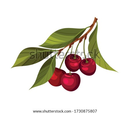 cherry branch with mature