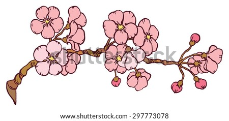 cherry or japan sakura branch