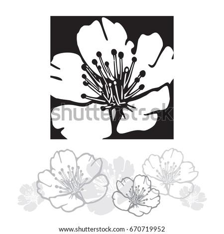 cherry tree flower vector