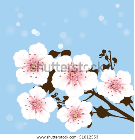 Cherry tree flowers on black background
