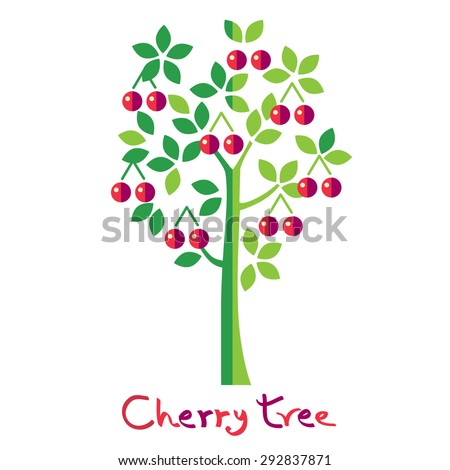 cherry tree isolated on white