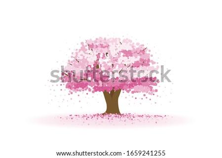 cherry tree with cherry blossom