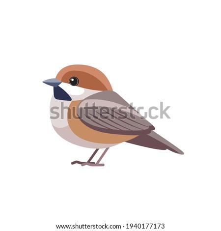 Chestnut-backed Chickadee (Poecile rufescens). Sparrow bird cartoon flat style beautiful character of ornithology, vector illustration isolated on white background. Stock photo ©