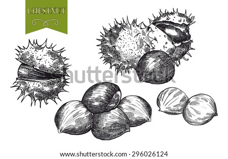 chestnut set of vector sketches on white background