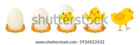 Chicken hatching stages. Newborn little cute chick, small baby bird emergence from egg, cracked shell in laying hens nest. Easter chicks concept. Funny domestic animal vector cartoon isolated concept Stockfoto ©