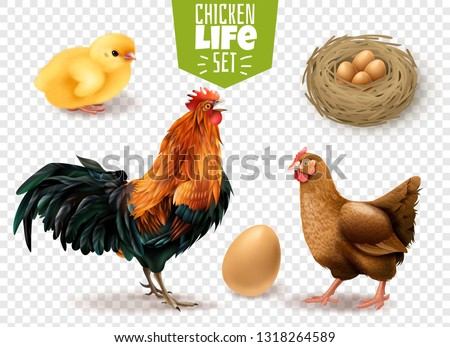 Chickens clipart chicken drawing, Chickens chicken drawing Transparent FREE  for download on WebStockReview 2020