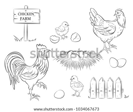 chicken  rooster  chicken  egg