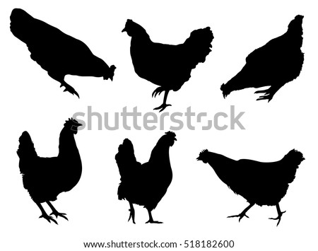 stock-vector-chicken-silhouettes-collection-on-the-white-background