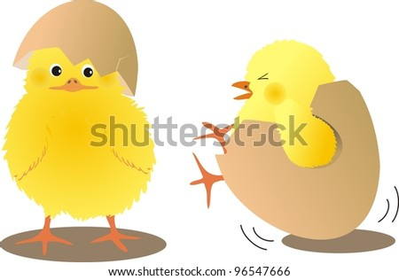 chicks with eggs