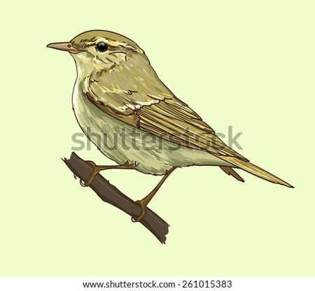 Chiffchaff  vector illustration isolated birds. birds flying, animals, bird silhouette, bird vector