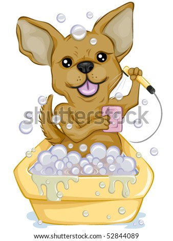 Chihuahua Bathing - Vector