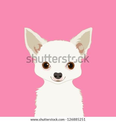 Chihuahua, The buddy dog
