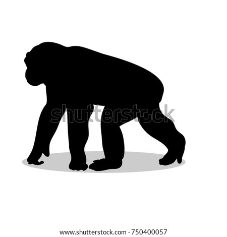 Chimpanzee monkey primate black silhouette animal. Vector Illustrator.