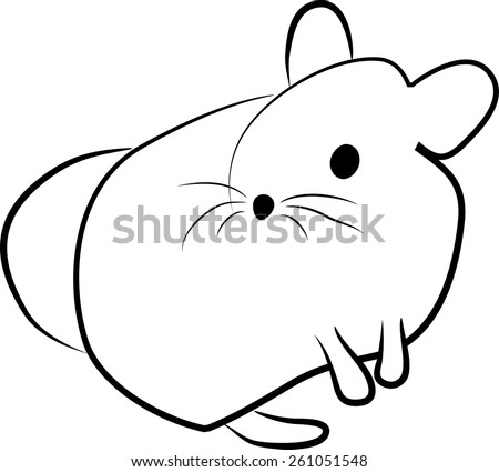 chinchilla vector illustration