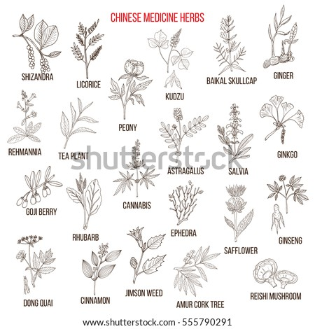 Chinese medicinal herbs. Hand drawn vector set of medicinal plants
