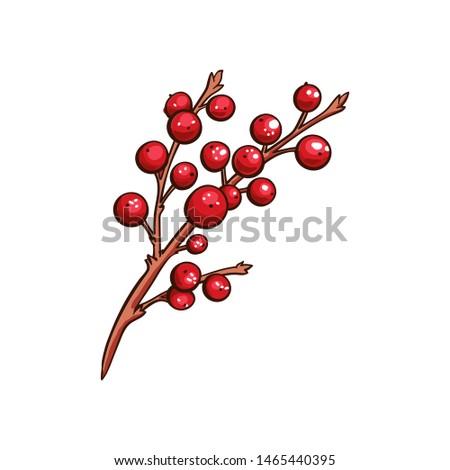 christmas berry holly or ilex