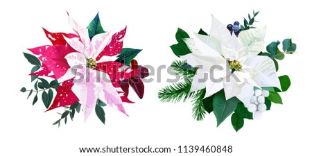 Christmas bouquets arranged from red and white poinsettia, fir branch, emerald eucalyptus selection, mix of plants and berries. Happy holiday greenery. Watercolor style set. All elements are isolated.