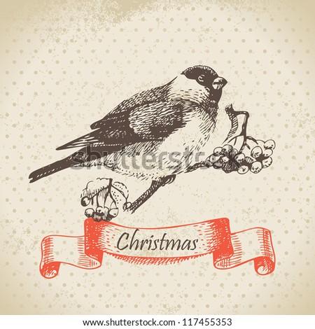 Christmas bullfinch and ashberry. Hand drawn illustration
