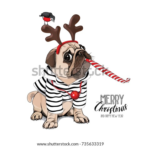 christmas card pug dog in a
