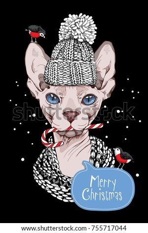 Christmas card. Sphynx Cat in a knitted cap, scarf and with a lollipop. Vector illustration.