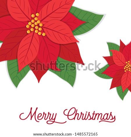 Christmas card with poinsettias design, vector illustration