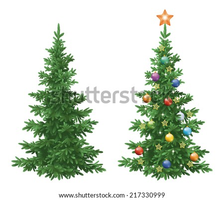 christmas holiday spruce fir