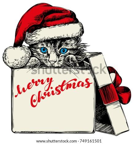 christmas kitten in santa