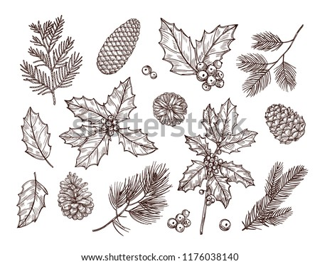 Christmas plants. Sketch fir branches, pine cones and holly leaves with berries. Christmas winter botanical vintage hand drawn set. Branch with pine sketch, decoration tree illustration