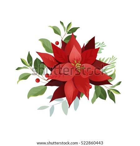 Christmas poinsettia flowers, red leaves.