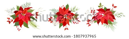 christmas red poinsettia vector