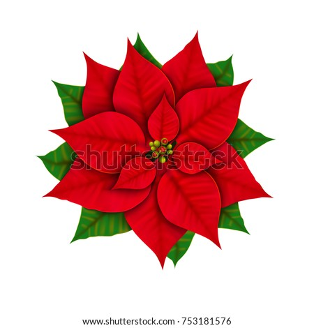 Christmas star flower isolated on white background top view. Poinsettia close-up. Stock vector illustration.