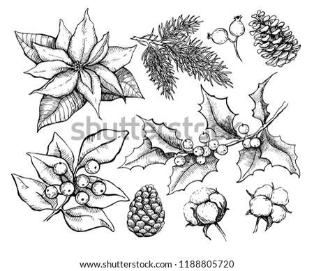 Christmas traditional plans. Vector drawing  illustration of holly, mistletoe, poinsettia, pine cone, cotton, fir tree . Engraved xmas decoration element. Great for greeting and invitation card banner