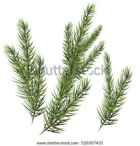 Christmas tree branches. spruce fir-tree