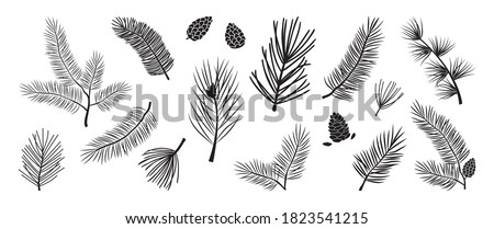 Christmas tree vector branches, fir and pine cones, evergreen set, holiday decoration, black winter symbols isolated on white background. Nature illustration Foto stock ©