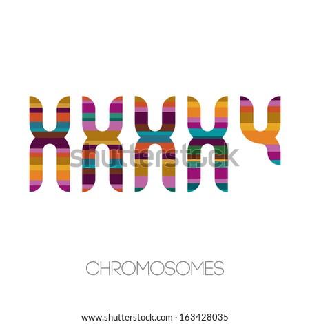 chromosomes  vector illustration