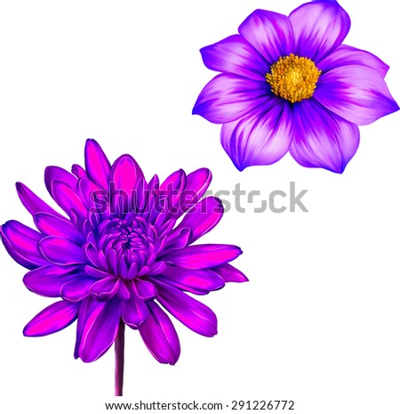 chrysanthemum flower  pink