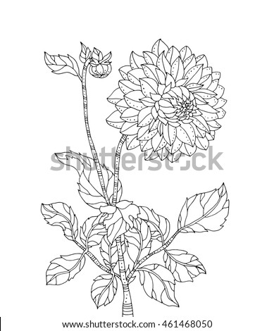 chrysanthemum flower vector artwork coloring book page for adult black and white line