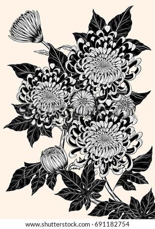 chrysanthemum vector on brown