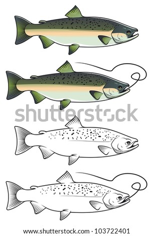 Chum salmon fish in color and w/b versions for fishing design. Jpeg version also available in gallery