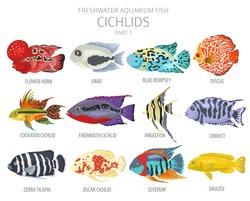 Cichlids fish. Freshwater aquarium fish icon set flat style isolated on white.  Vector illustration