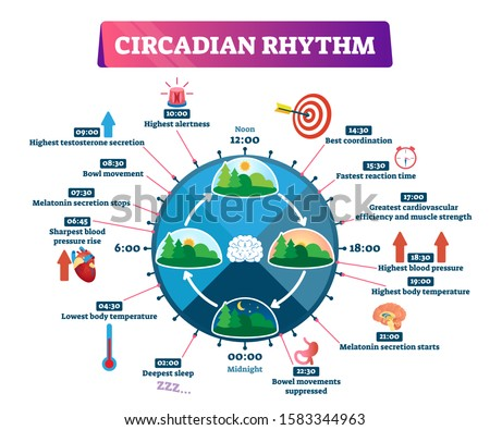 Circadian rhythm vector illustration. Labeled educational day cycle scheme. Daily human body inner regulation schedule. Natural sleep-wake biological process explanation and chronobiology infographic. Foto stock ©